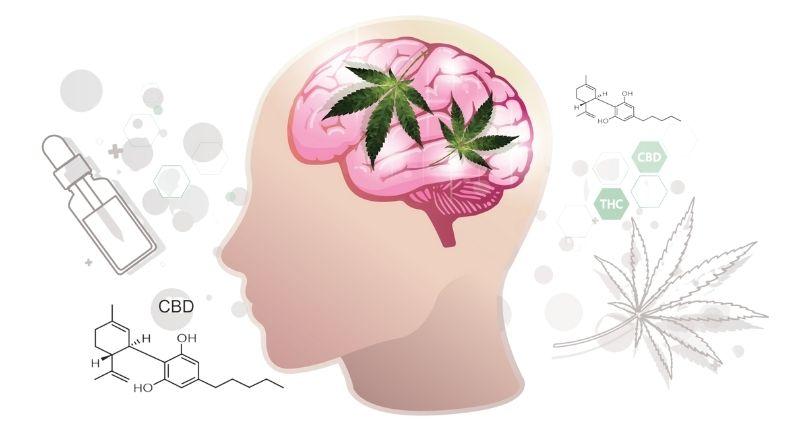 cbd_affects_brain